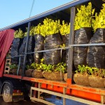 Eco Home Plant Delivery Artic