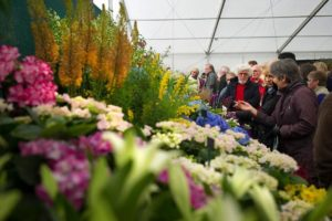 Cardiff Transport Flower Show