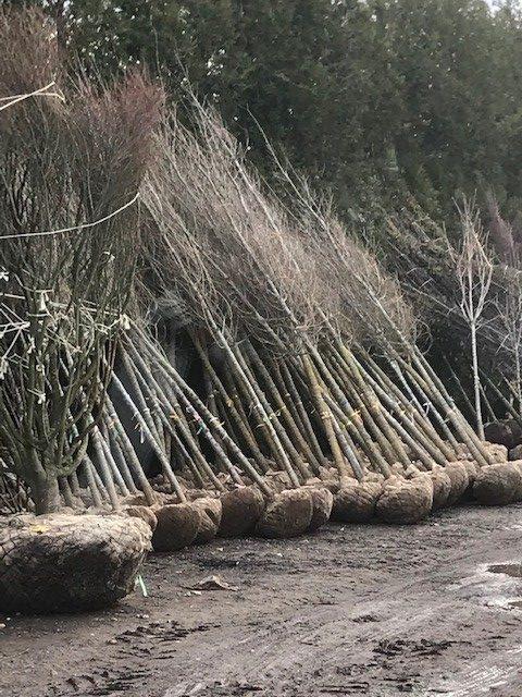 Tree plant Transport
