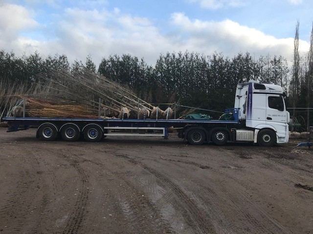 root-Trees-flatbed-haulage
