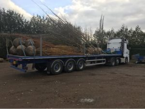tree-root-haulage-sussex